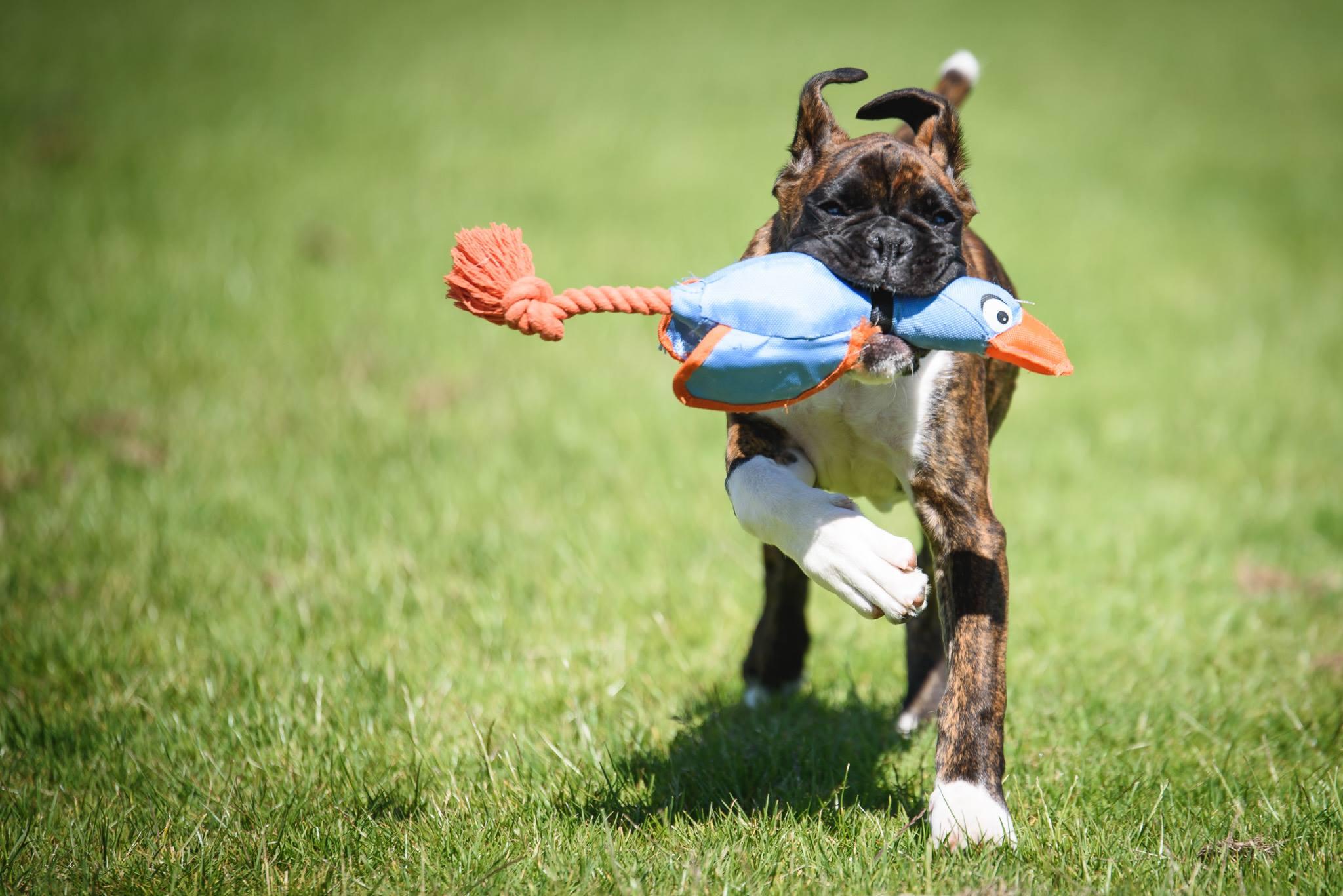 Dog Photography Workshop